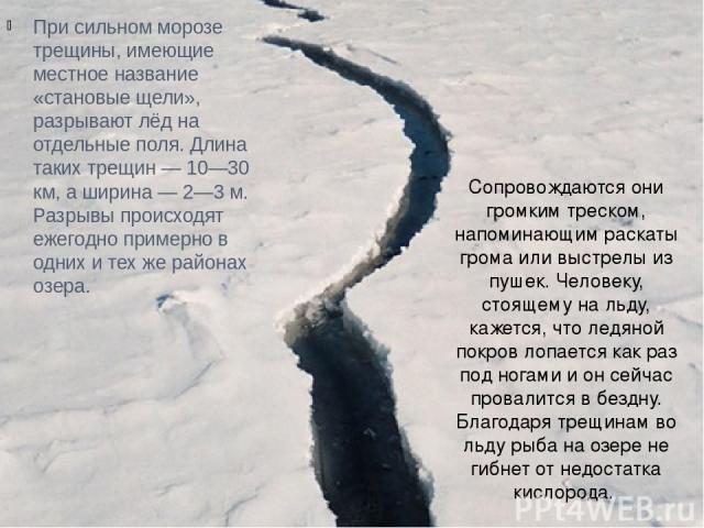При сильном морозе трещины, имеющие местное название «становые щели», разрывают лёд на отдельные поля. Длина таких трещин — 10—30 км, а ширина — 2—3 м. Разрывы происходят ежегодно примерно в одних и тех же районах озера. Сопровождаются они громким т…