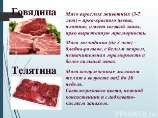 Говядина Мясо взрослых животных (3-7 лет) – ярко-красного цвета, плотное, имеет