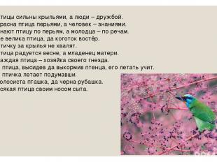Птицы сильны крыльями, а люди – дружбой. Красна птица перьями, а человек – знани