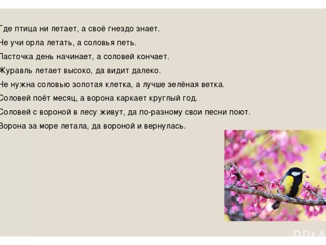 Где птица ни летает, а своё гнездо знает. Не учи орла летать, а соловья петь. Ласточка день начинает, а соловей кончает. Журавль летает высоко, да видит далеко. Не нужна соловью золотая клетка, а лучше зелёная ветка. Соловей поёт месяц, а ворона кар…