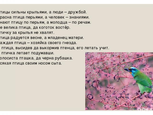 Птицы сильны крыльями, а люди – дружбой. Красна птица перьями, а человек – знаниями. Знают птицу по перьям, а молодца – по речам. Не велика птица, да коготок востёр. Птичку за крылья не хвалят. Птица радуется весне, а младенец матери. Каждая птица –…