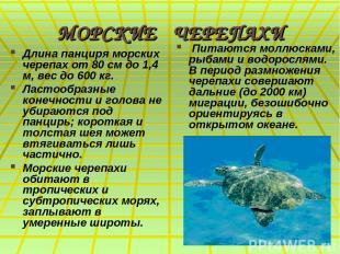 МОРСКИЕ ЧЕРЕПАХИ Длина панциря морских черепах от 80 см до 1,4 м, вес до 600 кг.