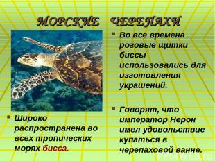 МОРСКИЕ ЧЕРЕПАХИ Широко распространена во всех тропических морях бисса. Во все в