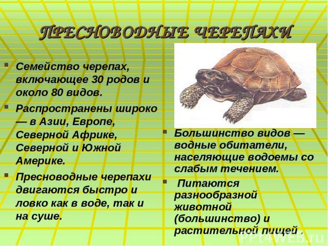 ПРЕСНОВОДНЫЕ ЧЕРЕПАХИ Семейство черепах, включающее 30 родов и около 80 видов. Распространены широко — в Азии, Европе, Северной Африке, Северной и Южной Америке. Пресноводные черепахи двигаются быстро и ловко как в воде, так и на суше. Большинство в…