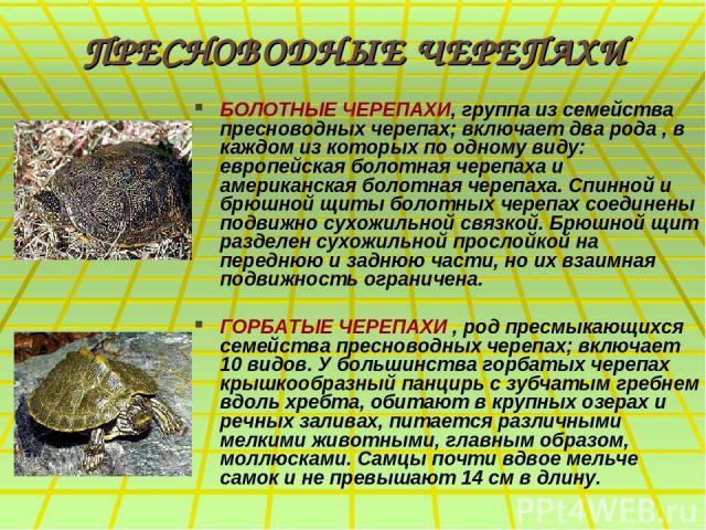 ПРЕСНОВОДНЫЕ ЧЕРЕПАХИ БОЛОТНЫЕ ЧЕРЕПАХИ, группа из семейства пресноводных черепах; включает два рода , в каждом из которых по одному виду: европейская болотная черепаха и американская болотная черепаха. Спинной и брюшной щиты болотных черепах соедин…