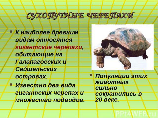 СУХОПУТНЫЕ ЧЕРЕПАХИ К наиболее древним видам относятся гигантские черепахи, обитающие на Галапагосcких и Сейшельских островах. Известно два вида гигантских черепах и множество подвидов. Популяции этих животных сильно сократились в 20 веке.