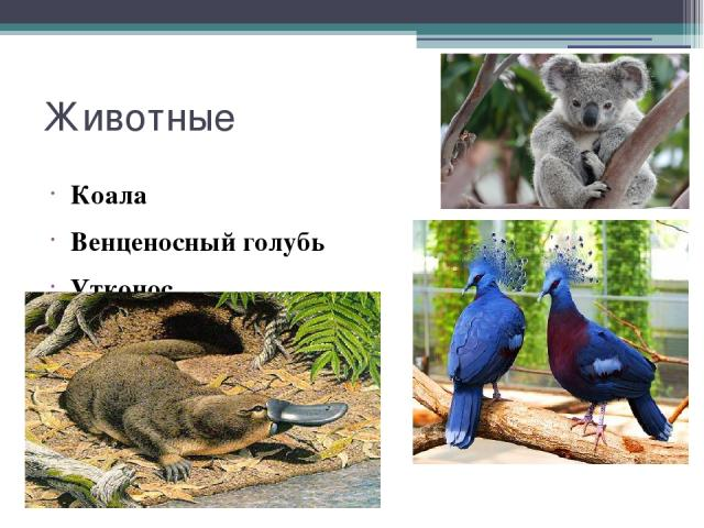 Животные Коала Венценосный голубь Утконос