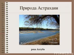 Природа Астрахани река Ахтуба
