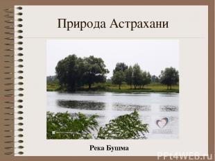 Природа Астрахани Река Бушма