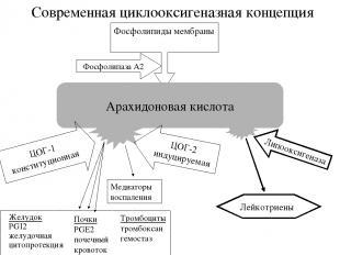 Современная циклооксигеназная концепция Фосфолипиды мембраны Арахидоновая кислот