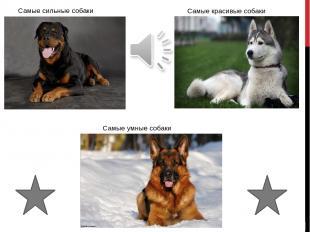 Самые сильные Все собаки сильны по своему, но самые сильные из них берутся на са