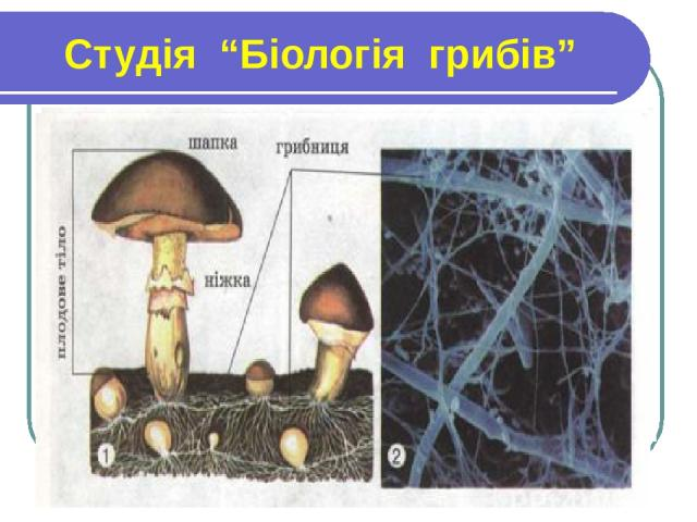 """Студія """"Біологія грибів"""""""