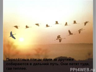 Перелётные птицы одни за другими собираются в дальний путь. Они летят туда, где