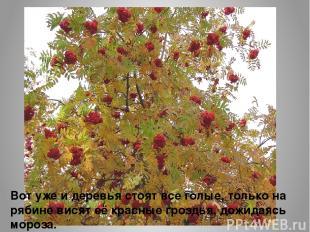 Вот уже и деревья стоят все голые, только на рябине висят её красные гроздья, до