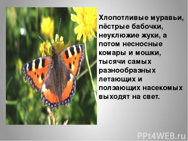 Хлопотливые муравьи, пёстрые бабочки, неуклюжие жуки, а потом несносные комары и мошки, тысячи самых разнообразных летающих и ползающих насекомых выходят на свет.
