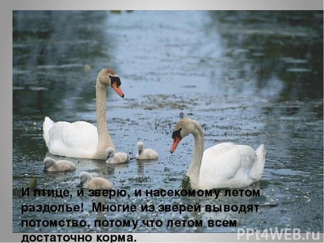 И птице, и зверю, и насекомому летом раздолье! Многие из зверей выводят потомство, потому что летом всем достаточно корма.