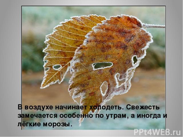 В воздухе начинает холодеть. Свежесть замечается особенно по утрам, а иногда и лёгкие морозы.