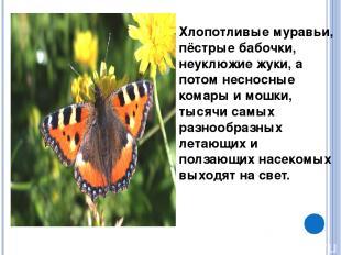 Хлопотливые муравьи, пёстрые бабочки, неуклюжие жуки, а потом несносные комары и
