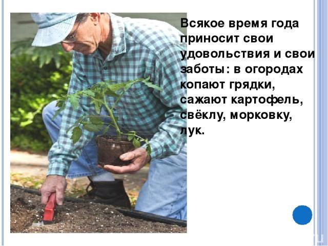 Всякое время года приносит свои удовольствия и свои заботы: в огородах копают грядки, сажают картофель, свёклу, морковку, лук.