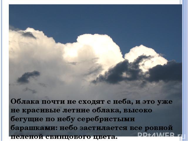 Облака почти не сходят с неба, и это уже не красивые летние облака, высоко бегущие по небу серебристыми барашками: небо застилается все ровной пеленой свинцового цвета.