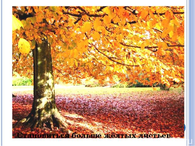. Становиться больше жёлтых листьев.