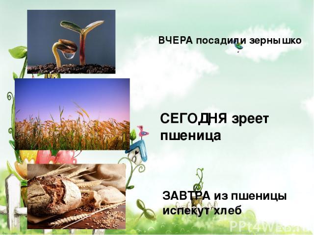 ВЧЕРА посадили зернышко СЕГОДНЯ зреет пшеница ЗАВТРА из пшеницы испекут хлеб