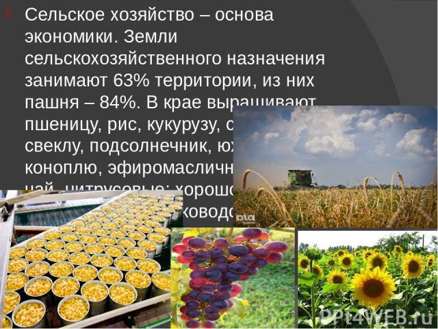 Сельское хозяйство – основа экономики. Земли сельскохозяйственного назначения занимают 63% территории, из них пашня – 84%. В крае выращивают пшеницу, рис, кукурузу, сахарную свеклу, подсолнечник, южную коноплю, эфиромасличные культуры, чай, цитрусов…