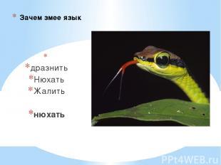 Зачем змее язык дразнить Нюхать Жалить нюхать