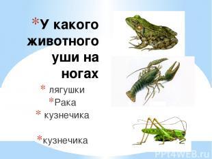 У какого животного уши на ногах лягушки Рака кузнечика кузнечика