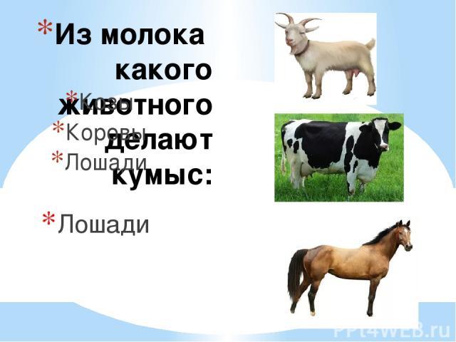 Из молока какого животного делают кумыс: Козы Коровы Лошади Лошади