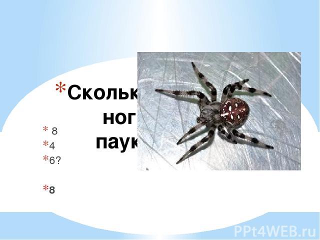 Сколько ног у паука 8 4 6? 8