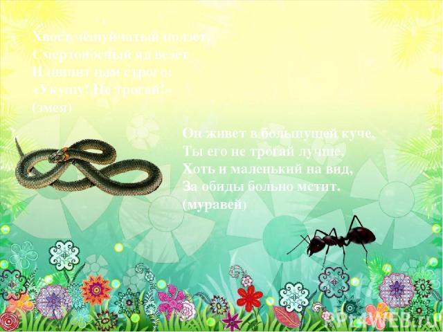 Хвост чешуйчатый ползет, Смертоносный яд везет И шипит нам строго: «Укушу! Не трогай!» (змея) Он живет в большущей куче, Ты его не трогай лучше, Хоть и маленький на вид, За обиды больно мстит. (муравей)