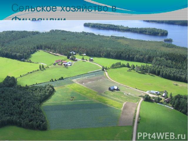 Сельское хозяйство в Финляндии