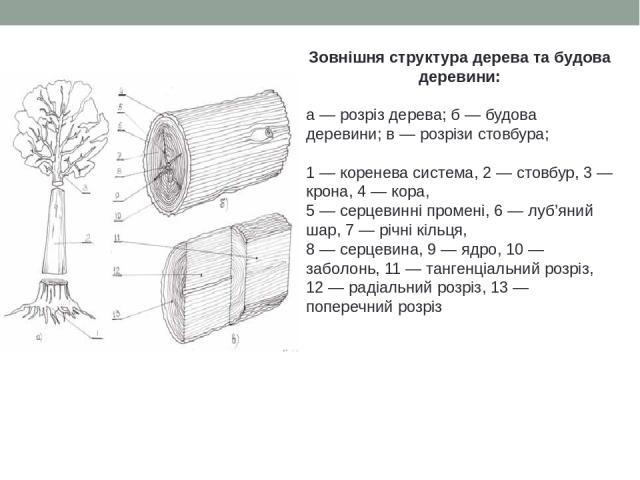 Зовнішня структура дерева та будова деревини: а — розріз дерева; б — будова деревини; в — розрізи стовбура; 1 — коренева система, 2 — стовбур, 3 — крона, 4 — кора, 5 — серцевинні промені, 6 — луб'яний шар, 7 — річні кільця, 8 — серцевина, 9 — ядро, …