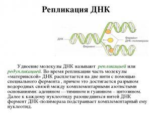 Репликация ДНК Удвоение молекулы ДНК называют репликацией или редупликацией. Во