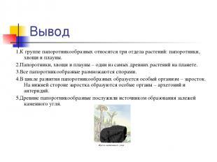 Вывод 1.К группе папоротникообразных относятся три отдела растений: папоротники,