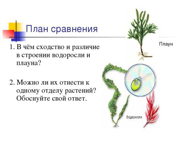 План сравнения 1. В чём сходство и различие в строении водоросли и плауна? 2. Можно ли их отнести к одному отделу растений? Обоснуйте свой ответ. Плаун