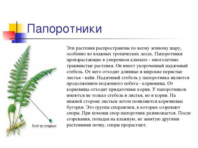 Папоротники Эти растения распространены по всему земному шару, особенно во влажных тропических лесах. Папоротники произрастающие в умеренном климате - многолетние травянистые растения. Он имеет укороченный надземный стебель. От него отходят длинные …