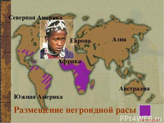 Размещение негроидной расы Северная Америка Южная Америка Азия Европа Африка Австралия