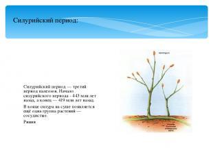Силурийский период — третий период палеозоя. Начало силурийского периода - 443 м