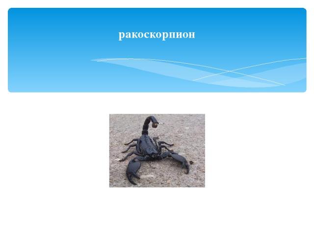 ракоскорпион