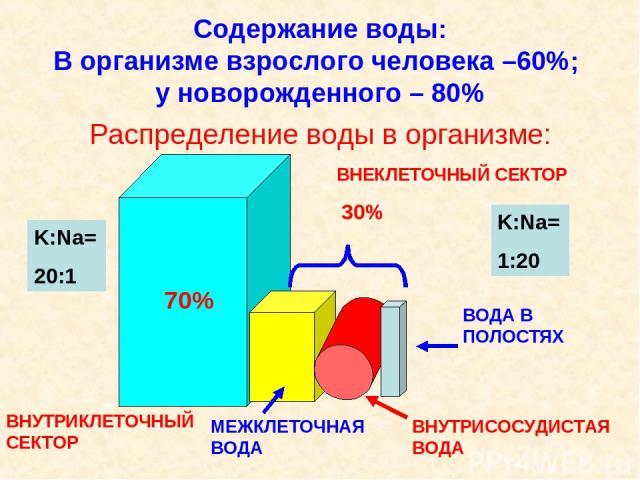 Содержание воды: В организме взрослого человека –60%; у новорожденного – 80% Распределение воды в организме: ВНУТРИКЛЕТОЧНЫЙ СЕКТОР 70% ВНЕКЛЕТОЧНЫЙ СЕКТОР 30% МЕЖКЛЕТОЧНАЯ ВОДА ВНУТРИСОСУДИСТАЯ ВОДА ВОДА В ПОЛОСТЯХ K:Na= 20:1 K:Na= 1:20