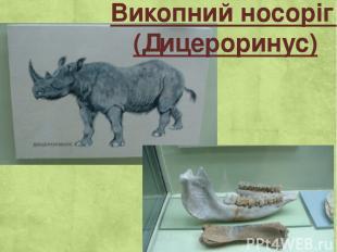 Викопний носоріг (Дицероринус)