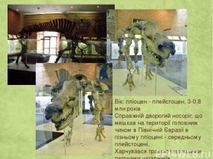 Вік: пліоцен - плейстоцен, 3-0,8 млн років Справжній дворогий носоріг, що мешкав