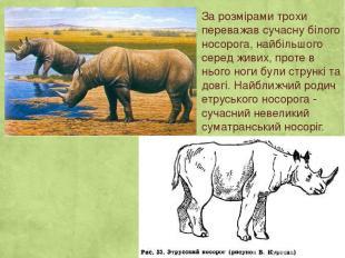 За розмірами трохи переважав сучасну білого носорога, найбільшого серед живих, п