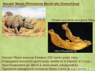 Носоріг Мерка (Rhinoceros Mercki або Dicerorhinus kirchbergensis) Носоріг Мірка