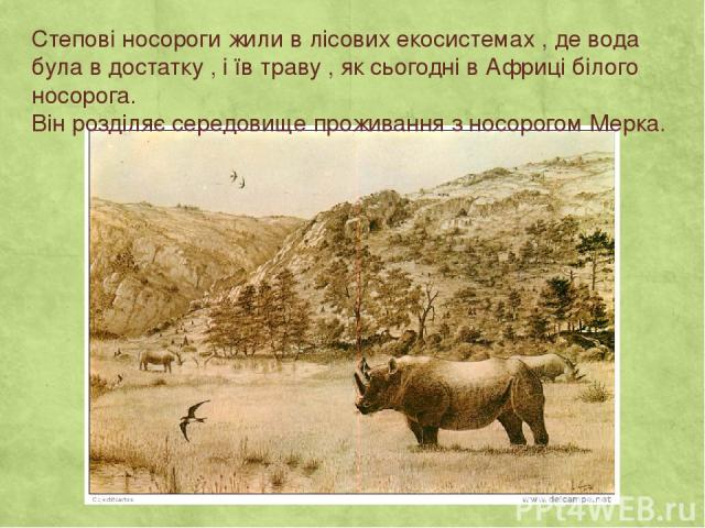Степові носороги жили в лісових екосистемах , де вода була в достатку , і їв траву , як сьогодні в Африці білого носорога. Він розділяє середовище проживання з носорогом Мерка.