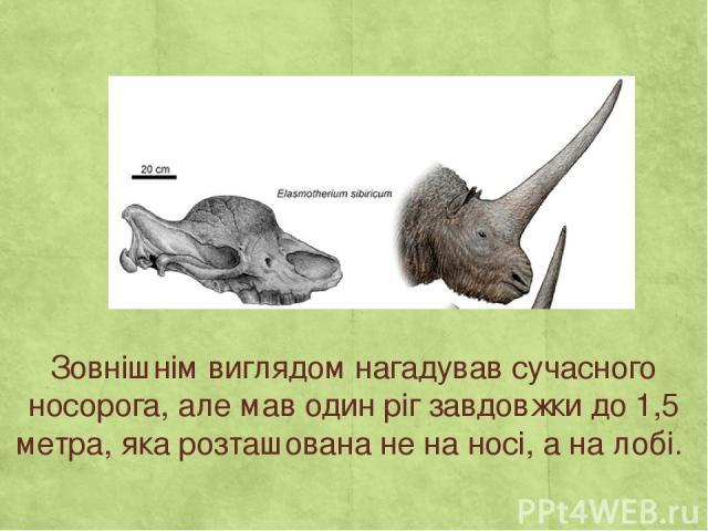 Зовнішнім виглядом нагадував сучасного носорога, але мав один ріг завдовжки до 1,5 метра, яка розташована не на носі, а на лобі.