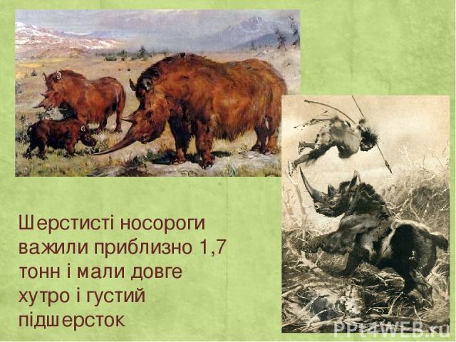 Шерстисті носороги важили приблизно 1,7 тонн і мали довге хутро і густий підшерсток.