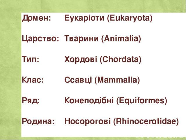 Домен: Еукаріоти(Eukaryota) Царство: Тварини(Animalia) Тип: Хордові(Chordata) Клас: Ссавці(Mammalia) Ряд: Конеподібні(Equiformes) Родина: Носорогові(Rhinocerotidae)